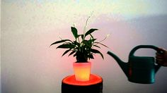 Take a look at how one of our prototypes works! #TechPOT #Prototype #LED #SmartPot #PlantCare #FlowerPot