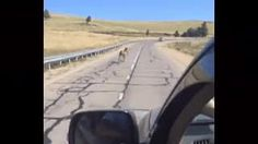 Foal saved from the road