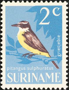 Great Kiskadee stamps - mainly images - gallery format