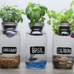 Resultado de imagen para mason jar aquaponics #AquaponicsMini