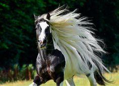15 razas de caballos que tienen un pelazo – Sol – El Meme