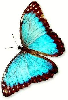 Aqua Butterfly.
