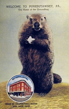 Groundhog postcard advertising the National Hotel in Punxsutawney, Pennsylvania