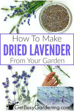 Drying lavender is easy, and doesn't take much time. Learn all about how to dry lavender, with step-by-step instructions for five different drying methods.
