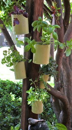 I'm thinking of something like this for my 'tea garden' - tin cans hanging from the garden fence posts and holding goodies for herbal tea.