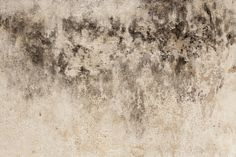How to remove black mold in your basement by Woodard Cleaning & Restoration in St. Louis, Mo.