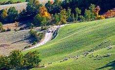 Il paese di Monteleone di Spoleto è inserito in uno degli angoli naturalistici e paesaggistici più gradevoli ed incontaminati dell'intera Valnerina nonché dell`Appennino Centrale, l`Oasi Naturalistica dei monti Coscerno ed Aspra, caratterizzato da imponenti rilievi montuosi ricoperti da boschi di faggi e di roverelle intervallati da ampi pascoli e piccoli campi oggi, come migliaia di anni fa, destinati alla coltivazione del Farro, a cui oggi è stata riconosciuta la D.O.P.