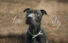 ...because Calvin knows that...all you need is love and a dog.   Please share Calvin's fantasy adventures and help them come true. As you can see Calvin is a sweet boy looking for his very own REAL LIFE home. And thanks!