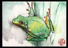 Green Tree Frog - watercolor and prisma pencil painting by Rebecca Rees; what we have in the ponds next door to us.