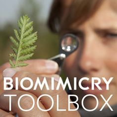 Biomimicry Toolbox: Applying Nature's Unifying Patterns   Your guide to applying nature's lessons to design challenges.     http://challenge.biomimicry.org/en/page/resources-en