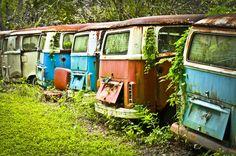 Five rusted, abandoned VW buses are lined up in a Volkswagen graveyard in Dade City, Florida. Vw Caravan, Kombi Camper, Camper Van, Campers, T3 Vw, Volkswagen Bus, Abandoned Cars, Abandoned Places, Abandoned Vehicles
