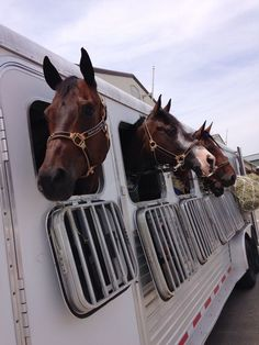 Equestrian  It's show time. Trailer SAFE. Have a team member or two follow behind  your horse trailer and another in front. The average driver does not have a clue as to how hard it is to stop a loaded van or go up hills etc. Protect your horses.