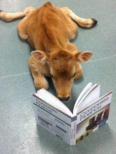 Smarty calf.