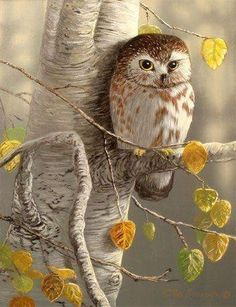 Find This Pin And More On Owls By Jodi Armendariz