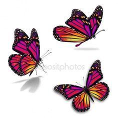 Famous Last Words Purple Butterfly Tattoo, Butterfly Tattoos Images, Butterfly Eyes, Butterfly Drawing, Butterfly Pictures, Butterfly Tattoo Designs, Butterfly Painting, Butterfly Jewelry, Monarch Butterfly