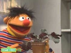 My Little Plant, from Sesame Street: Ah, simple pleasures, such as Bert and Ernie, and houseplants. This is the song that plays in my head every time I do my own watering rounds.