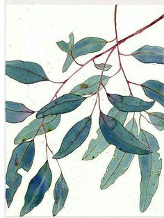 Illustration of gum leaves by Mango Frooty Illustration Botanique, Art Et Illustration, Watercolour Illustration, Pattern Illustration, Motif Floral, Arte Floral, Guache, Chiaroscuro, Art Design