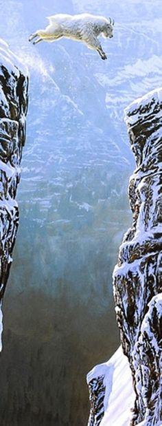 Leaping Mountain Goat, Colorado