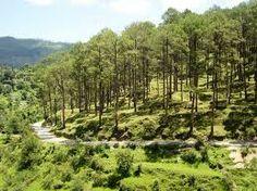 Uttaranchal Travel Forum