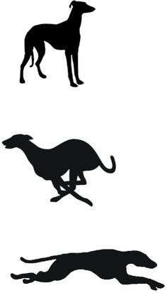 whippet tattoo  | whippet silhouettes - top one is good for tattoo