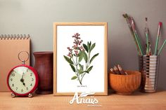 Sage flower - Botanical illustration, print, light beige paper, vintage, wall art, decoration by AnaisHomeDecor on Etsy