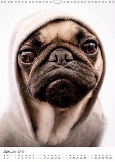 Edition lustige Tiere: Spaß mit Hunden - CALVENDO Kalender
