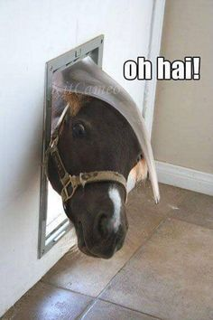 37 Funny Animal Pictures That Will Make Your Day - Horses Funny - Funny Horse Meme - - 37 Funny Animal Pictures That Will Make Your Day The post 37 Funny Animal Pictures That Will Make Your Day appeared first on Gag Dad. Funny Horse Memes, Funny Animal Jokes, Funny Horses, Cute Horses, Pretty Horses, Horse Love, Cute Funny Animals, Funny Animal Pictures, Animal Memes