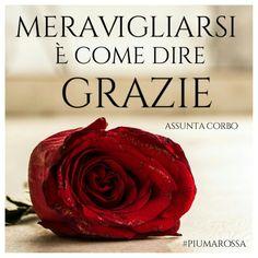Meravigliatevi. Godete della bellezza della vita. #citazioni #piumarossa