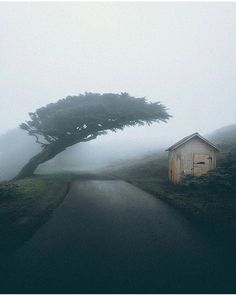 Point Reyes, California l Photography by @spencercotton