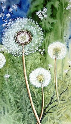 """Dandelion"" Painting by Maria Inhoven buy now as poster, art print and greeting card. Watercolor And Ink, Watercolor Flowers, Watercolor Paintings, Painting Art, Watercolours, Dandelion Painting, Dandelion Flower, Art Floral, Flower Art"