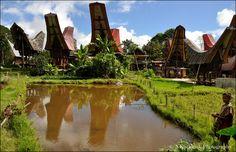 Baruppu, Sulawesi, Indonesia
