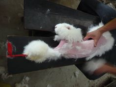 Selling sweaters and socks made with angora wool makes Norm Thompson and Sahalie complicit in animal abuse. Urge them to stop NOW.
