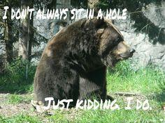 Funny bear #humor