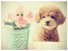 犬の投稿写真。タイトルはカーネーション
