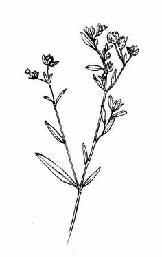 Wildflower tattoo: