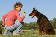 Artículo en colaboración con perros de málaga