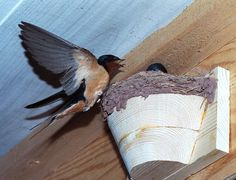 Artificial nests for Barn Swallows
