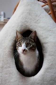 ソフトで暖かいフェルト猫の洞窟完全に手作りの、それぞれの作品はユニークです。, MADE IN ITALY  組成 ウール100%は水とオリーブオイルの石鹸で手でフェルト。  DIMENSIONS 深い: 13,77インチ 幅: 25,59 インチ 高さ: 21.65インチ 入口直径: 7,08  *あなたのキティの好みに応じてそれを拡大することができます!  WASHING 猫のベッドには、掃除機できれいに簡単であり、洗濯ウールで洗濯機で洗浄した。 バック形状で、それらを配置するには、ちょうど新聞でそれらを記入し、それらを乾燥。 猫用ベッド, 猫のためのニッチ  WoolyCatCaves © All Rights Reserved