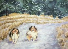 www.etsy.com/shop/DeniseRizzoStudioThis is a high quality 10 x 14 giclee print on Hahnemuhle German Etching paper The original painting was a watercolor and pastel painting. Two Shetland Sheepdogs enjoy a run in a winter landscape.