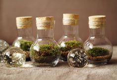 https://www.facebook.com/mossaterra/?fref=ts #moss #glass #forest #miniforest #decore