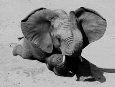 Baby elephant being adorable on the beach Elephants Never Forget, Save The Elephants, Baby Elephants, Beautiful Creatures, Animals Beautiful, Elephas Maximus, Elephant Love, All Nature, Tier Fotos
