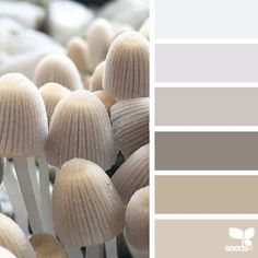 { nature tones } image via: The post Nature Tones appeared first on Design Seeds. Color Palette For Home, Colour Pallette, Color Palate, Colour Schemes, Color Combos, Neutral Paint Colors, Interior Paint Colors, Paint Colors For Home, House Colors