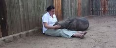 Orphaned Baby Rhino Scared To Sleep Alone At Night After Mother Killed By Poachers (PHOTOS)