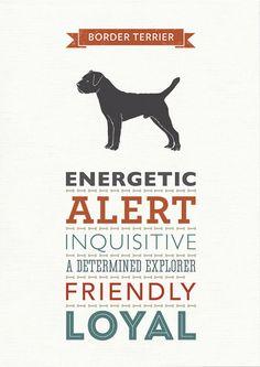 Border Terrier Dog Breed Traits Print Border by WellBredDesign