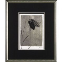 Phoenix Galleries Silver Stem 1 Framed Print - EL1001