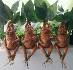 Harry Potter Mandrakes by Chrystal Brower. Professor Sprout and Professor Longbottom approved! @lunart_