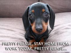 Very interesting post: Dachshund Puppies - 61 Pictures.сom lot of interesting things on Funny Dog. Dachshund Funny, Dachshund Puppies, Weenie Dogs, Dachshund Love, Funny Dogs, Cute Puppies, Cute Dogs, Dogs And Puppies, Funny Animals