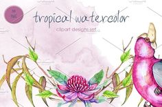 Tropical watercolor by luchioly on @creativemarket