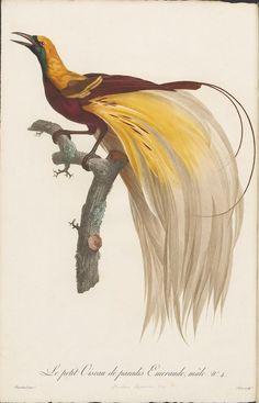 an 1806, 2-volume work called 'Histoire Naturelle des Oiseaux de Paradis et des Rolliers, suivie de celle des Toucans et des Barbus' by François Levaillant and Jacques Barraband