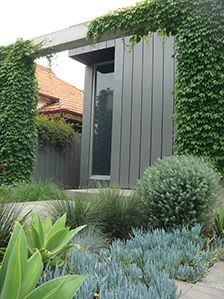 A palette of pastel shades compliments the soft grey tones of the modern house. Grey leafed Agaves, Westringias, Festucas and Senecios blend soothingly with the green Pennisetums and Lomandra grasses. Pink flowering Sedums add further interest. The columns olong the front of the house are swathed in Boston Ivy, blurring the boundary between garden and architecture